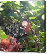 At The Butterfly Expo 2 Acrylic Print