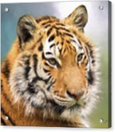 At The Center - Tiger Art Acrylic Print