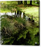 At The Edge Of The Forest Pond. Acrylic Print