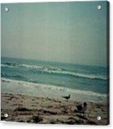 At The Seashore. Acrylic Print