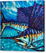 Atlantic Sailfish Acrylic Print