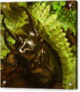 Atlas Beetle Acrylic Print