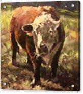 Atsa Lotta Bull Acrylic Print