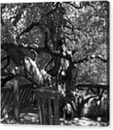 Attack Of The Oak Acrylic Print