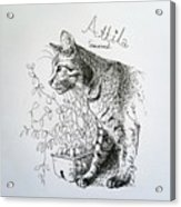 Attila Acrylic Print