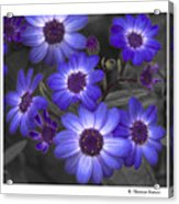 Au Naturel Acrylic Print