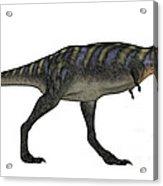 Aucasaurus Dinosaur Isolated On White Acrylic Print