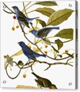 Audubon: Bunting, 1827-38 Acrylic Print