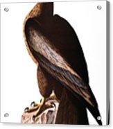 Audubon: Eagle Acrylic Print