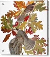 Audubon: Jay Acrylic Print