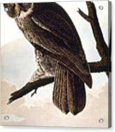 Audubon Owl Acrylic Print