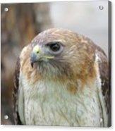 Audubon Quality Acrylic Print
