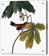 Audubon: Sparrow, 1827-38 Acrylic Print