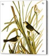 Audubon: Sparrow, (1827) Acrylic Print
