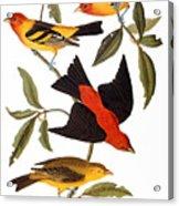 Audubon: Tanager, 1827 Acrylic Print