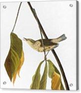 Audubon: Thrush, 1827 Acrylic Print