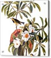 Audubon: Warbler, 1827-38 Acrylic Print