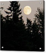 August Full Moon - 1 Acrylic Print