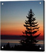 August Glow Pine Acrylic Print