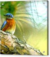 Augusta Masters 2010 05 Acrylic Print