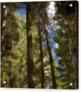Aupouri Forest Acrylic Print