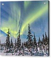 Aurora Borealis Over The Trees Acrylic Print