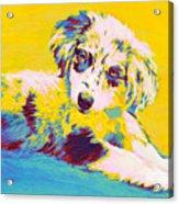 Aussie Puppy-yellow Acrylic Print by Jane Schnetlage