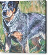 Australian Cattle Dog 1 Acrylic Print by Lee Ann Shepard