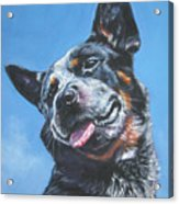 Australian Cattle Dog 2 Acrylic Print by Lee Ann Shepard