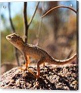 Australian Dragon Acrylic Print