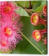 Australian Flora2 Acrylic Print