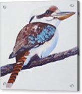 Australian Kookaburra Or Kingfisher Acrylic Print