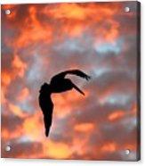 Australian Pelican Silhouette Acrylic Print