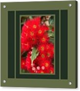 Australian Red Eucalyptus Flowers With Design Acrylic Print