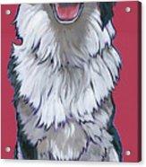 Australian Shepherd Acrylic Print