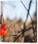 Automn Fruits Acrylic Print