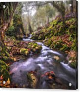 Autum In The Sierra Negra Highlands Acrylic Print