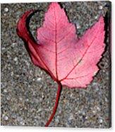 Autum Maple Leaf 2 Acrylic Print