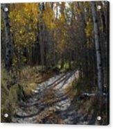 Autum Path Acrylic Print