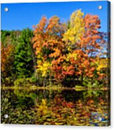 Autumn - Fall Color Acrylic Print