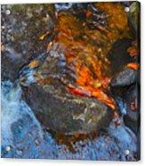 Autumn 2015 178 Acrylic Print