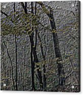 Autumn 2015 Panorama In The Woods Pa 01 Acrylic Print