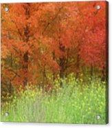 Autumn 3 - 16oct2016 Acrylic Print