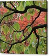 Autumn 7 Acrylic Print