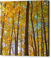 Autumn Afternoon Light Acrylic Print