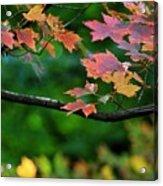 Autumn Along The Branch Acrylic Print