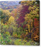 Autumn Arrives In Brown County - D010020 Acrylic Print