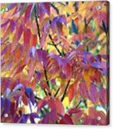 Autumn Ash Tree 1 Acrylic Print