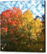 Autumn At Beaver Dam Acrylic Print