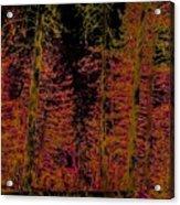 Autumn Aura Acrylic Print